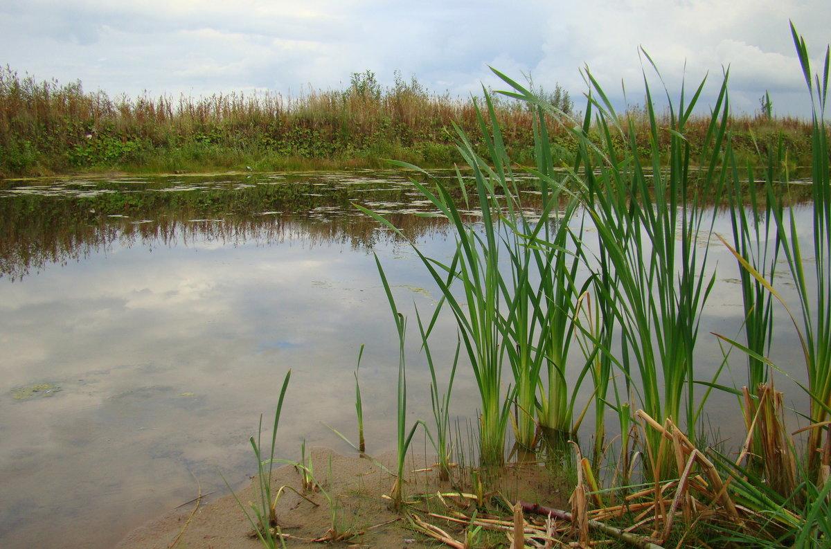 Речная вода - Елена Перевозникова