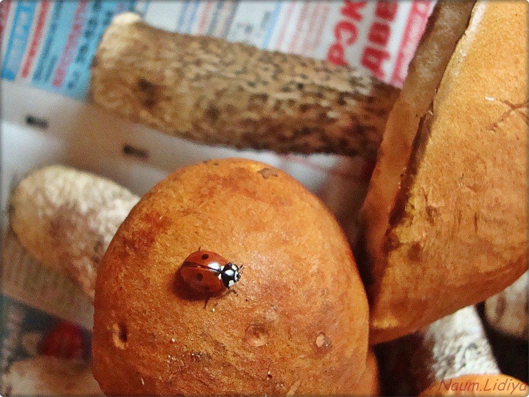 Прилетела из леса вместе с грибами - Лидия (naum.lidiya)