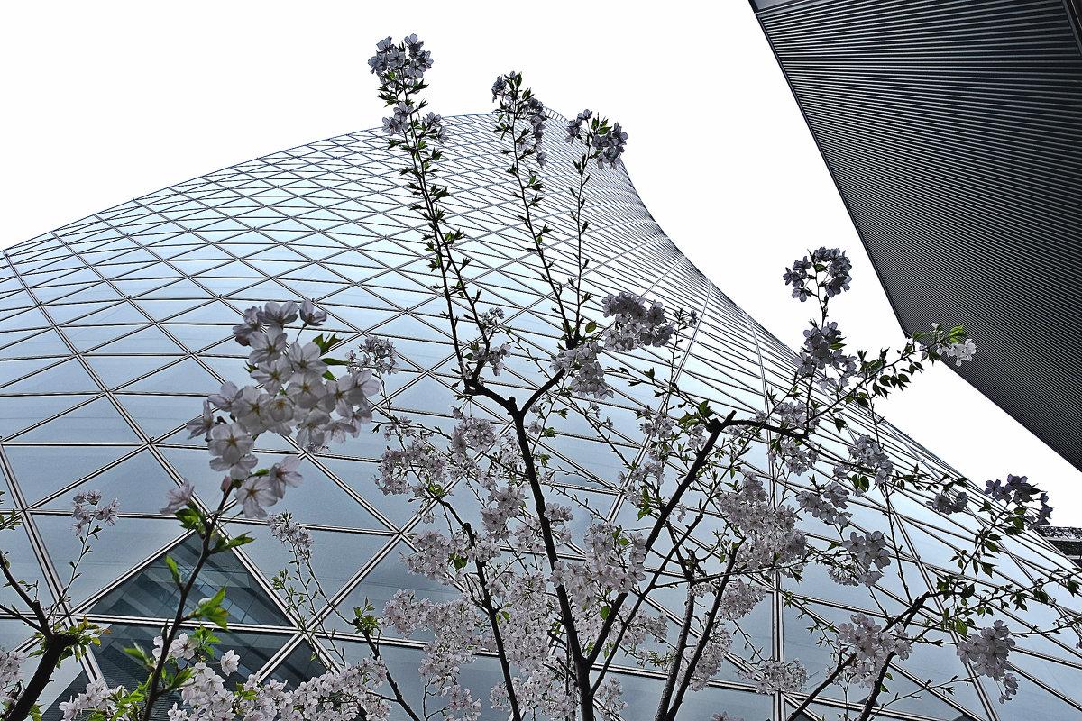Архитектура в Нагоя - Swetlana V