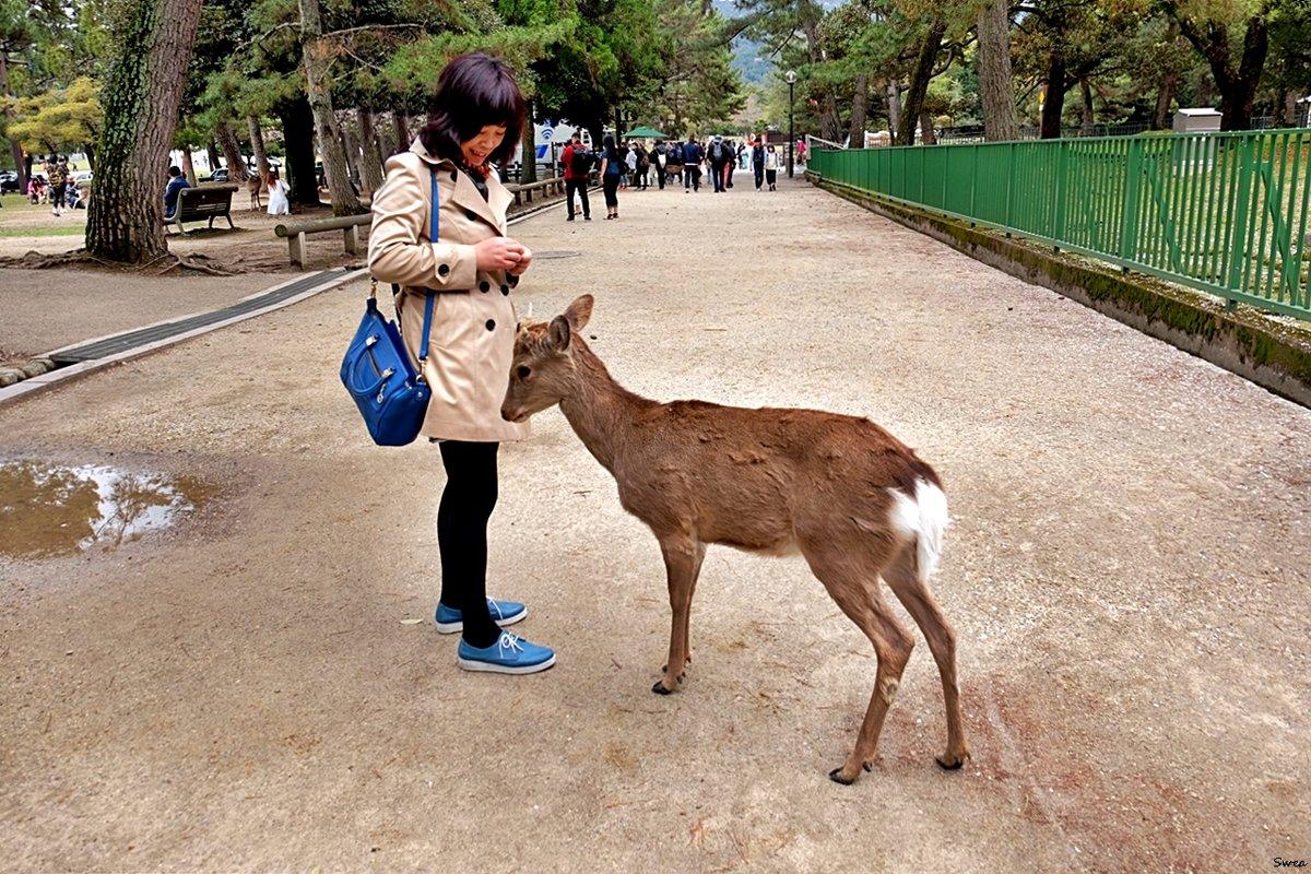 Нара Парк оленей - Swetlana V