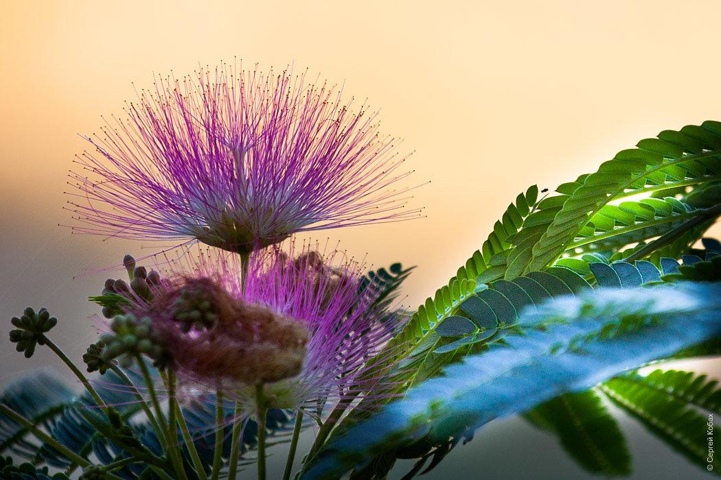 Цветок - Serge N