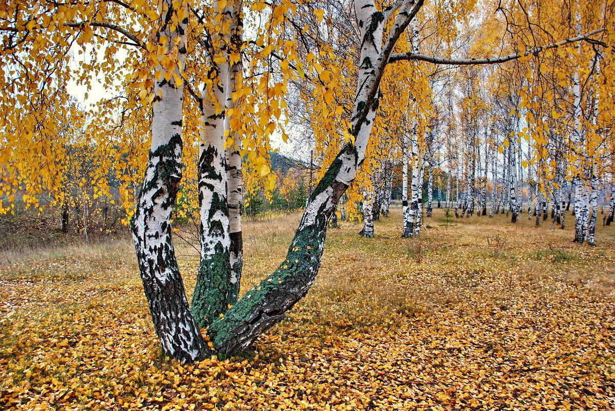 Осень пришла - Валерий Толмачев