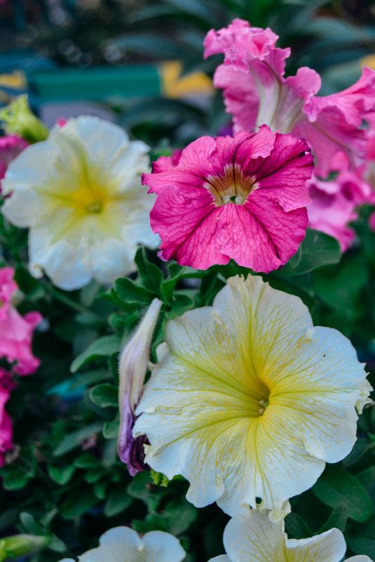 разных цветов и размеров - Света Кондрашова