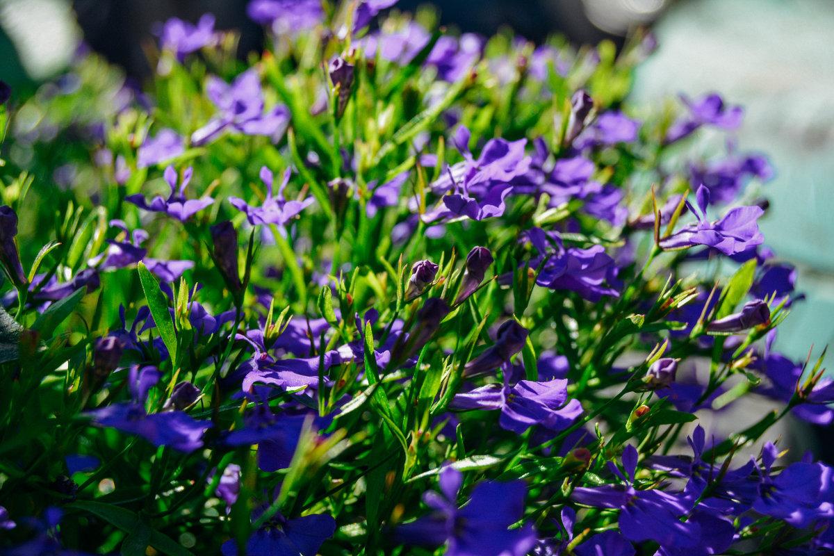 цветочки - Света Кондрашова