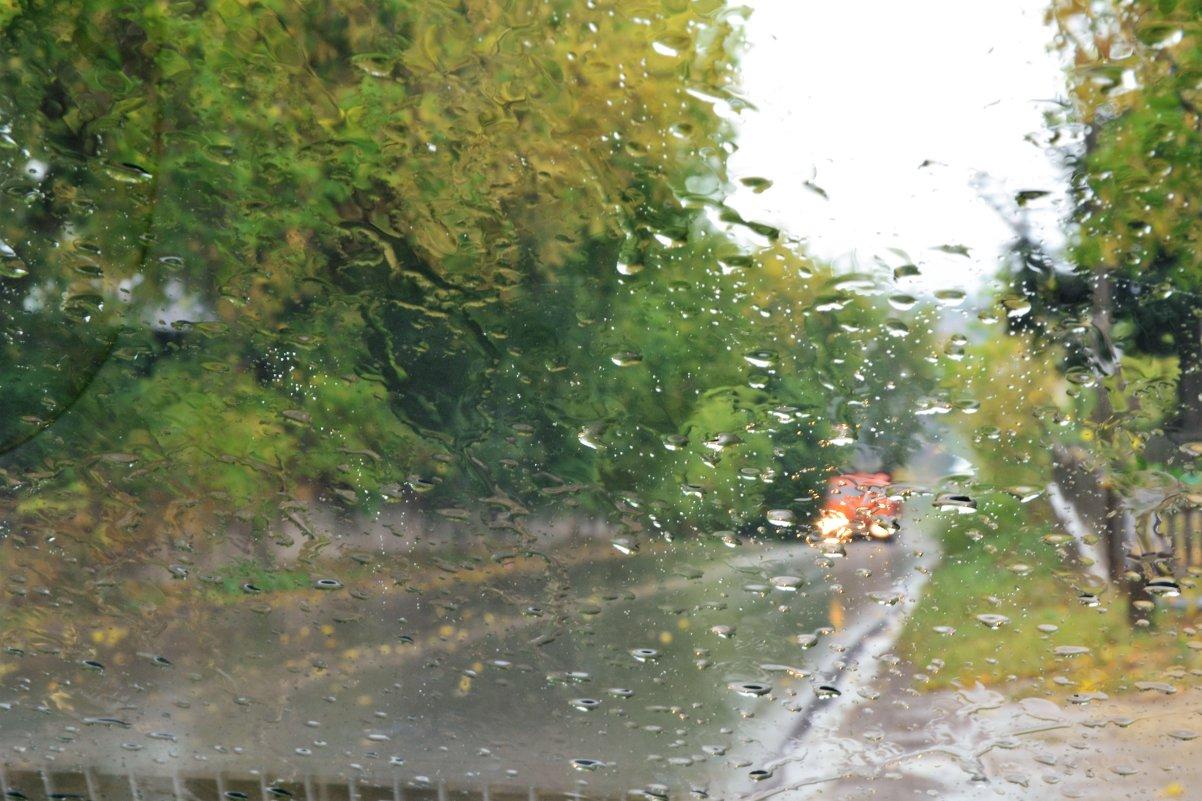 осень,дождь. - petyxov петухов