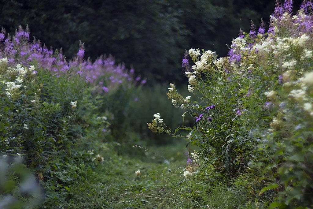 Луговые цветы - Daniela