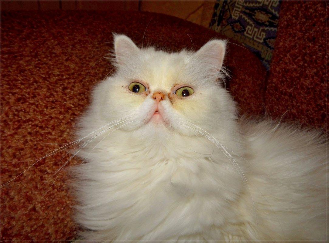 Котище - длинные усищи. - Чария Зоя
