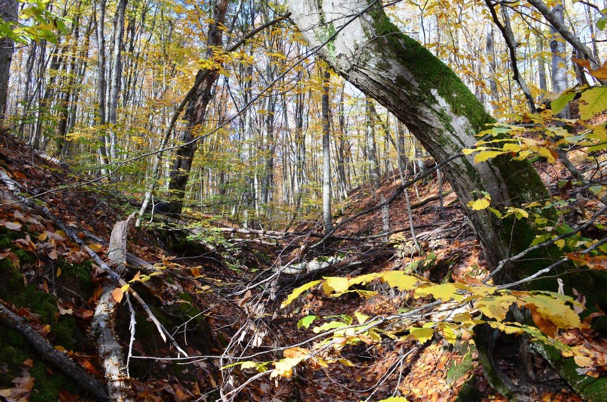 Осенью в лесу. - Береславская Елена