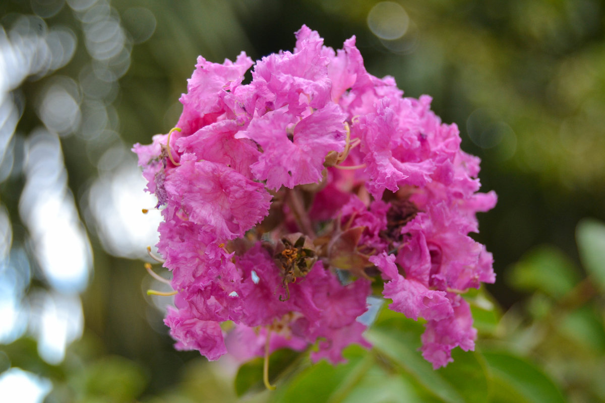 flowers - Вероника