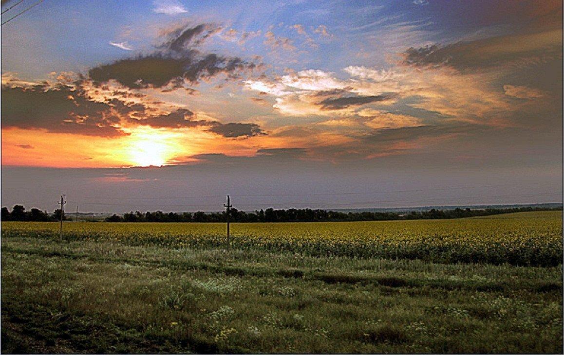 Небо...поле... - Елена Павлова (Смолова)