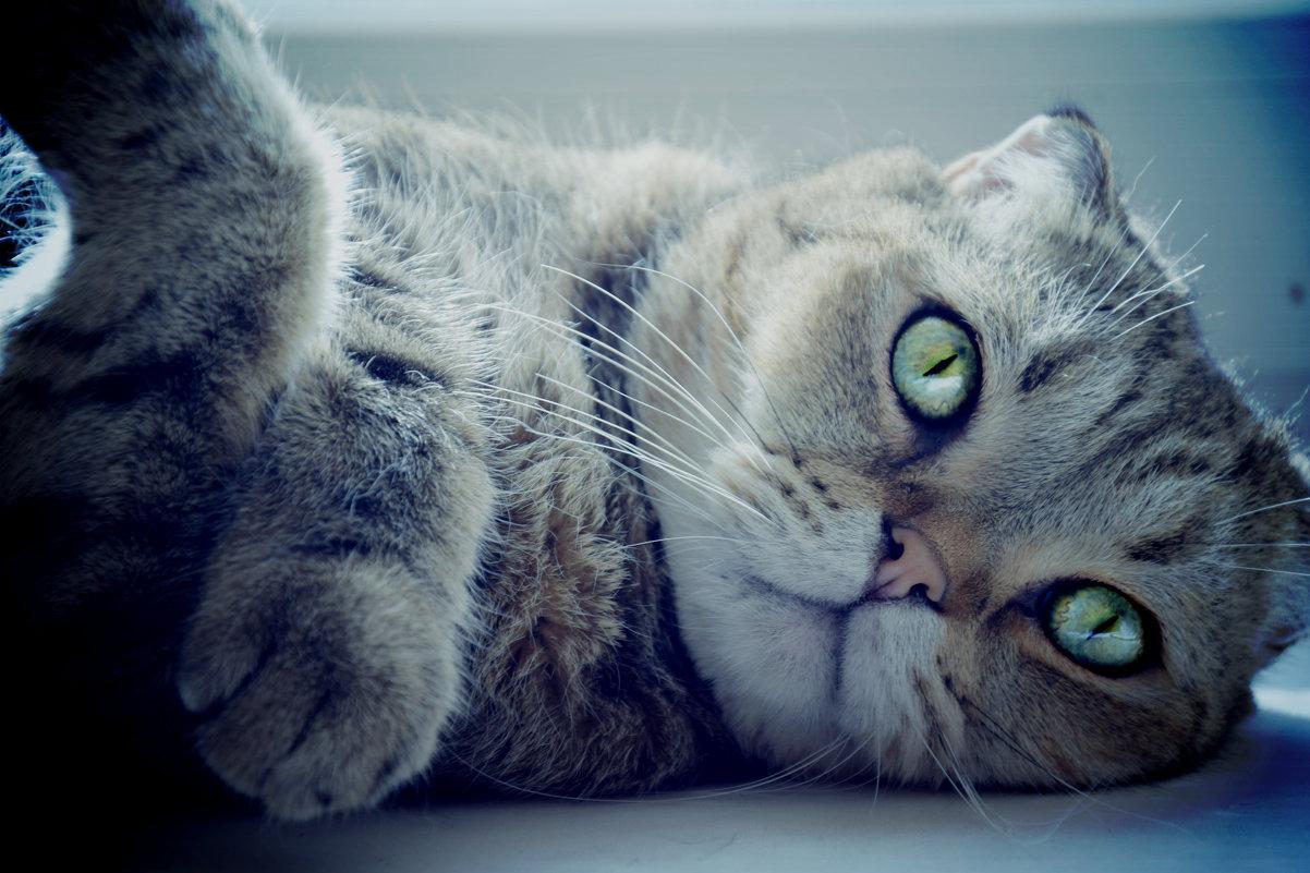 мой ленивый кот - Юлия Ташкенова