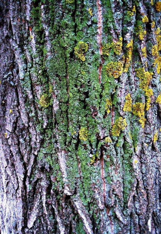 старое дерево - Ольга Заметалова