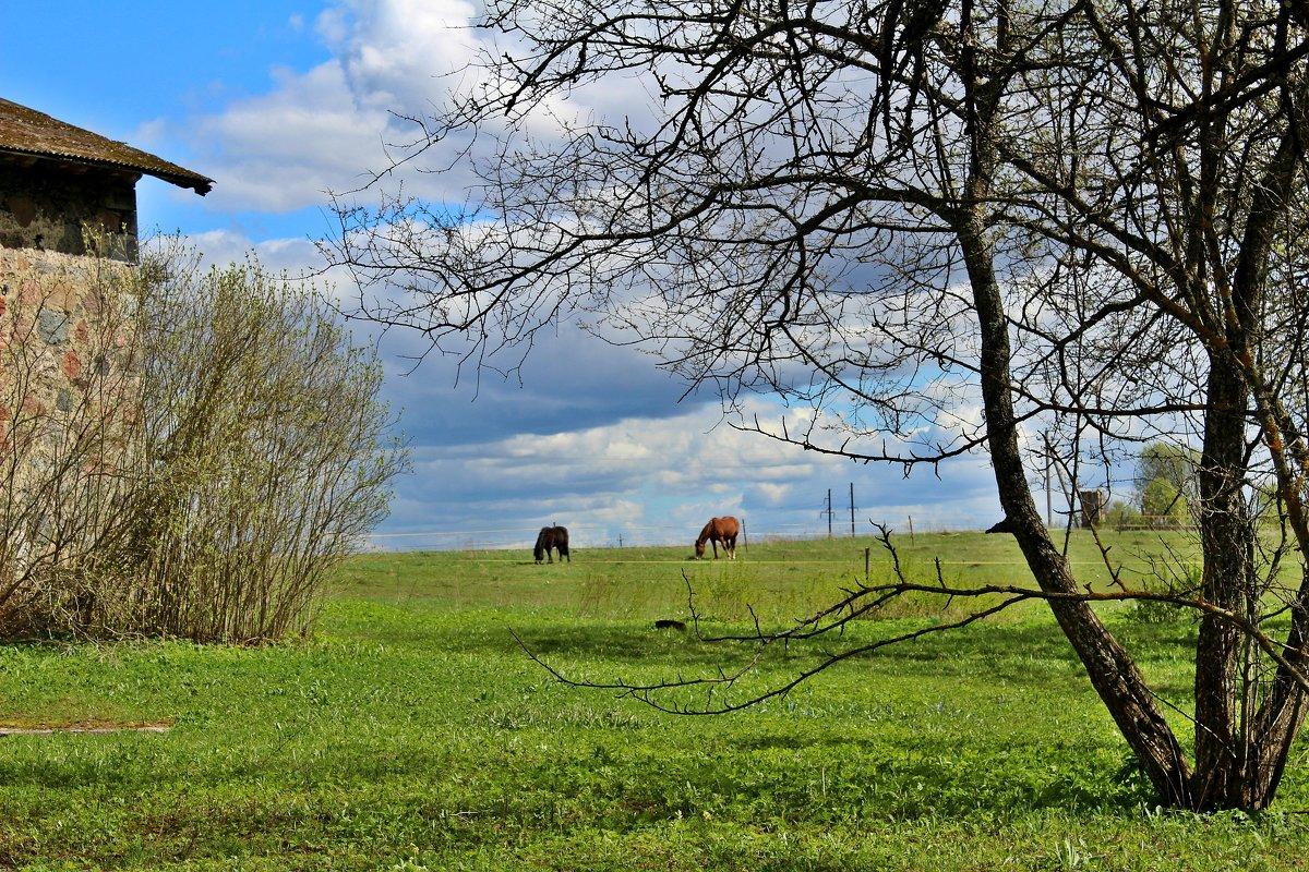 В поле - Marina Pavlova
