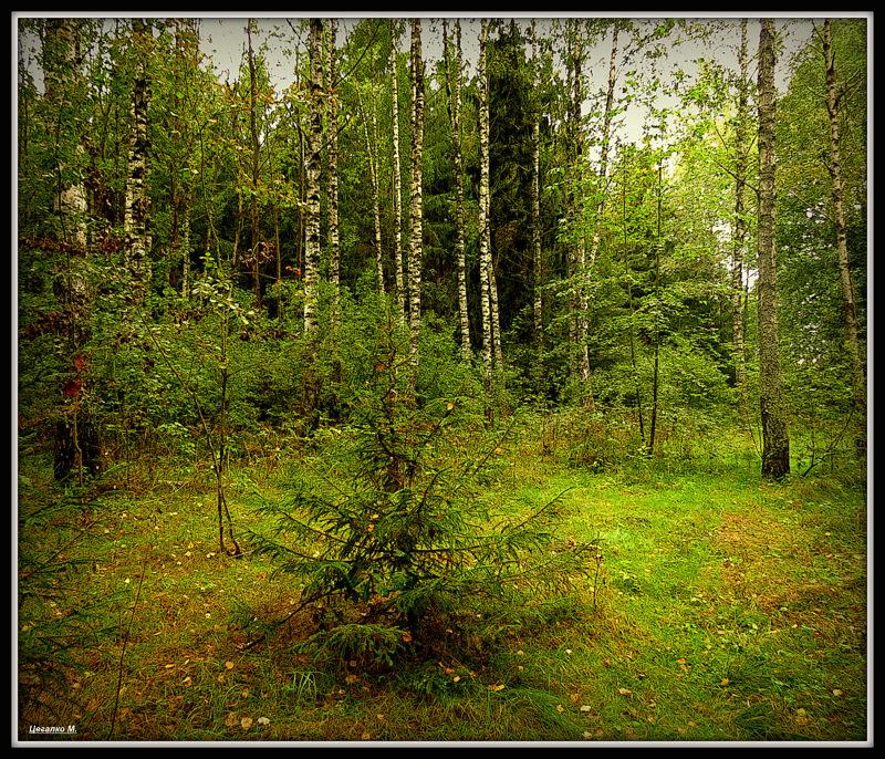 В лесу - Михаил Цегалко
