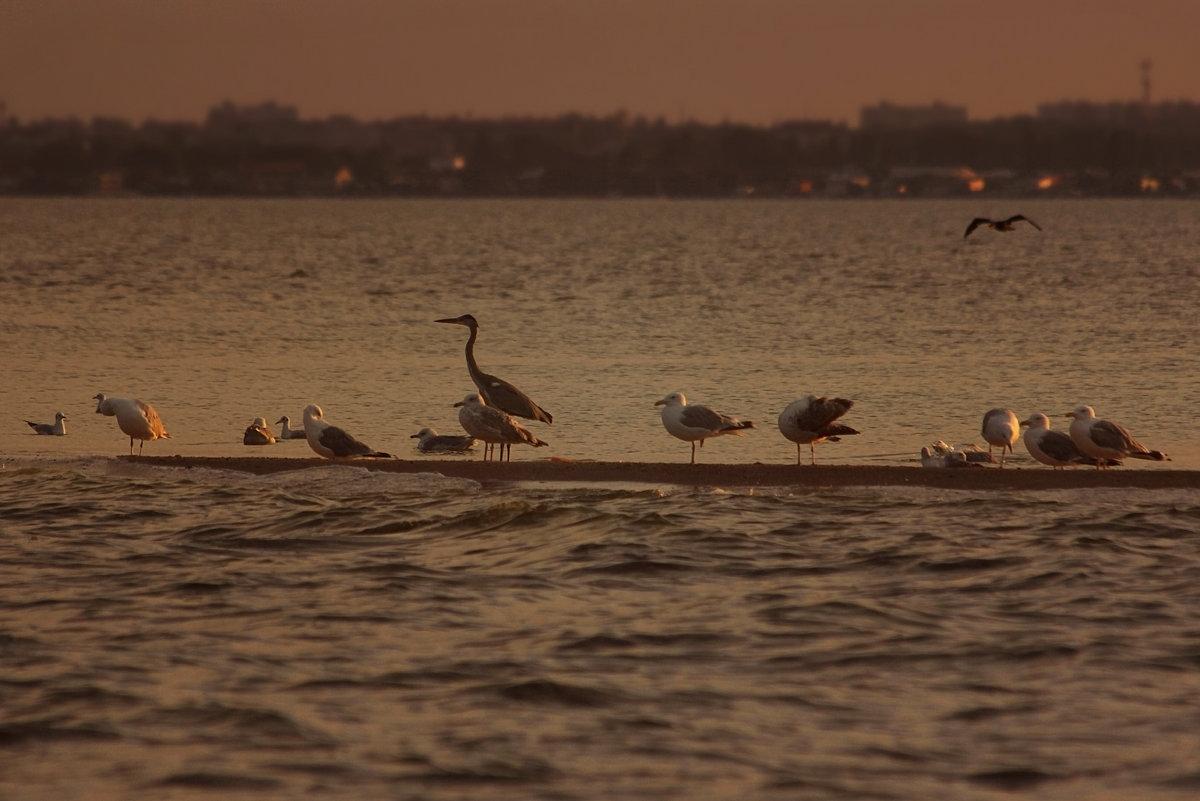 Птичий остров - Евгеша Сафронова