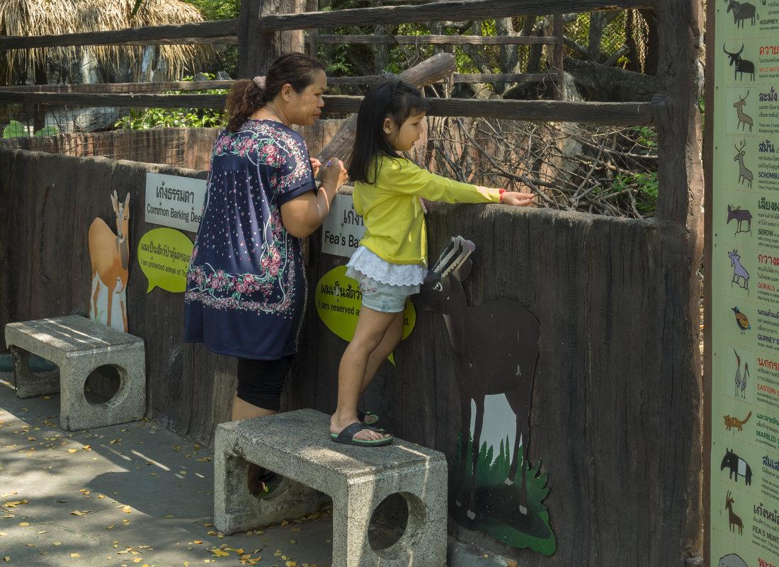 Таиланд. Бангкок. В зоопарке - Владимир Шибинский