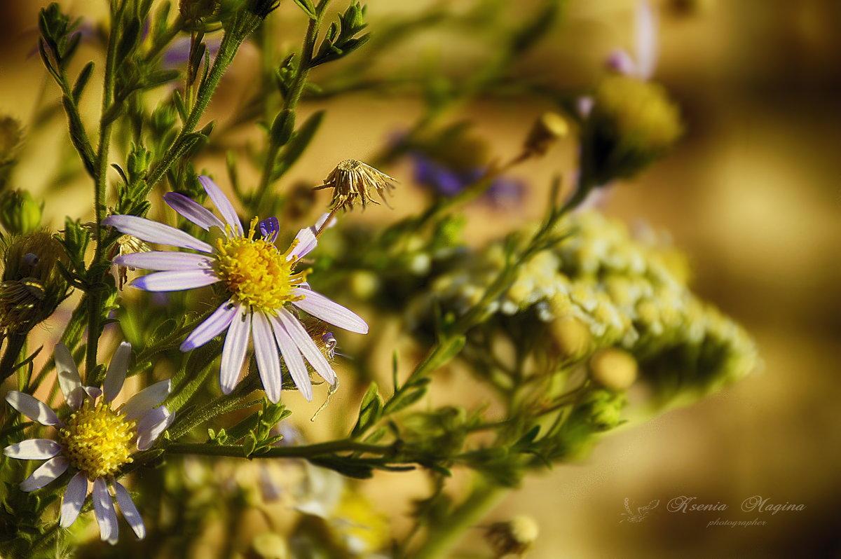 цветы предгорья - Ксения
