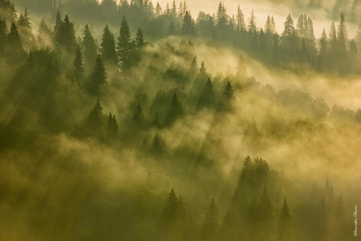Утро в тайге - Александр Чазов