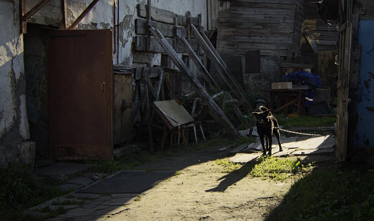 Охранник ценностей - Алексадр Мякшин