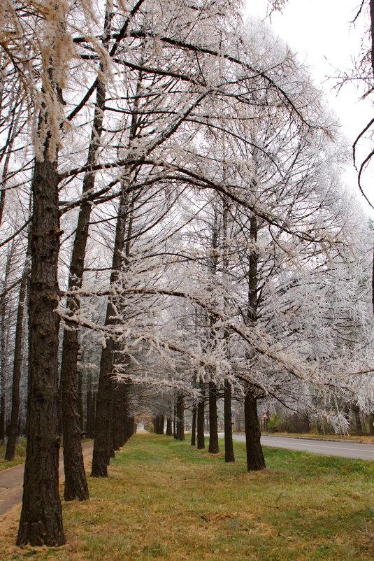 Зима приходит - Надежда