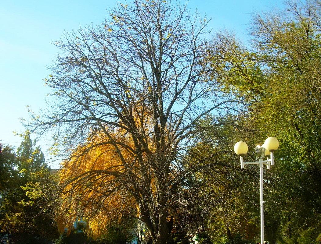 Осень в парке - татьяна