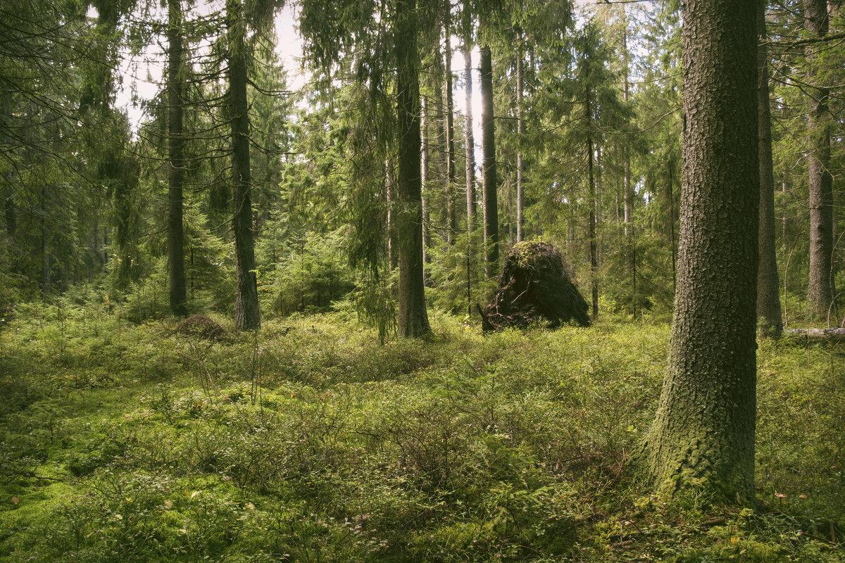 Лес в сентябре - Aнна Зарубина