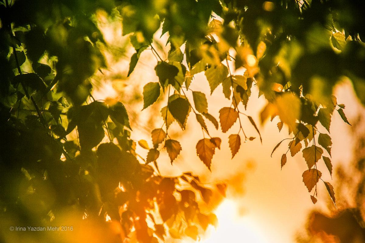 Осенние лучи - Ирина Яздан Мехр