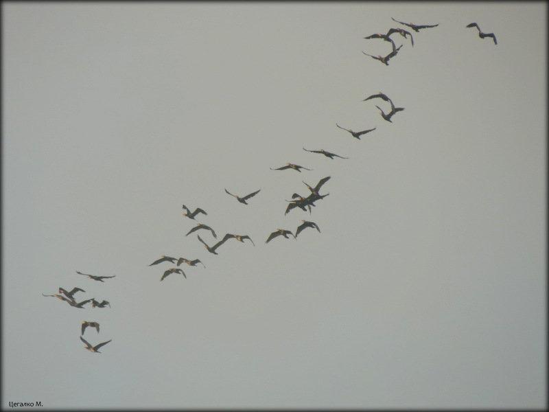 Птицы - Михаил Цегалко