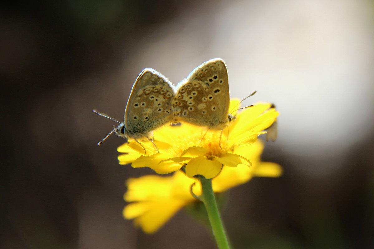 Бабочки - романтики - Светлана Попова