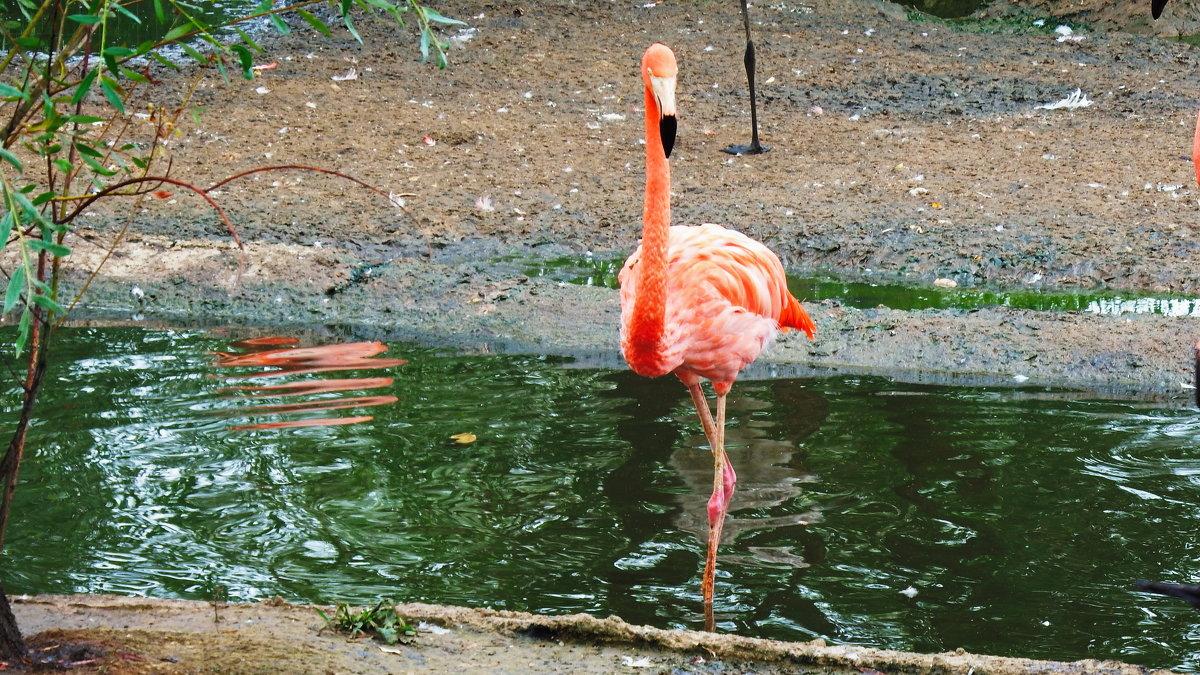 Розовый фламинго. - Лара ***