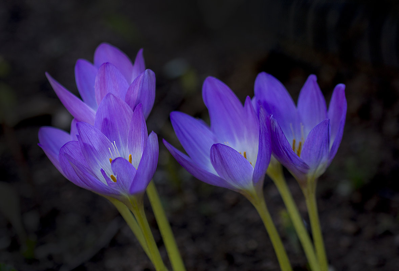 горят фонарики в саду - gribushko грибушко Николай