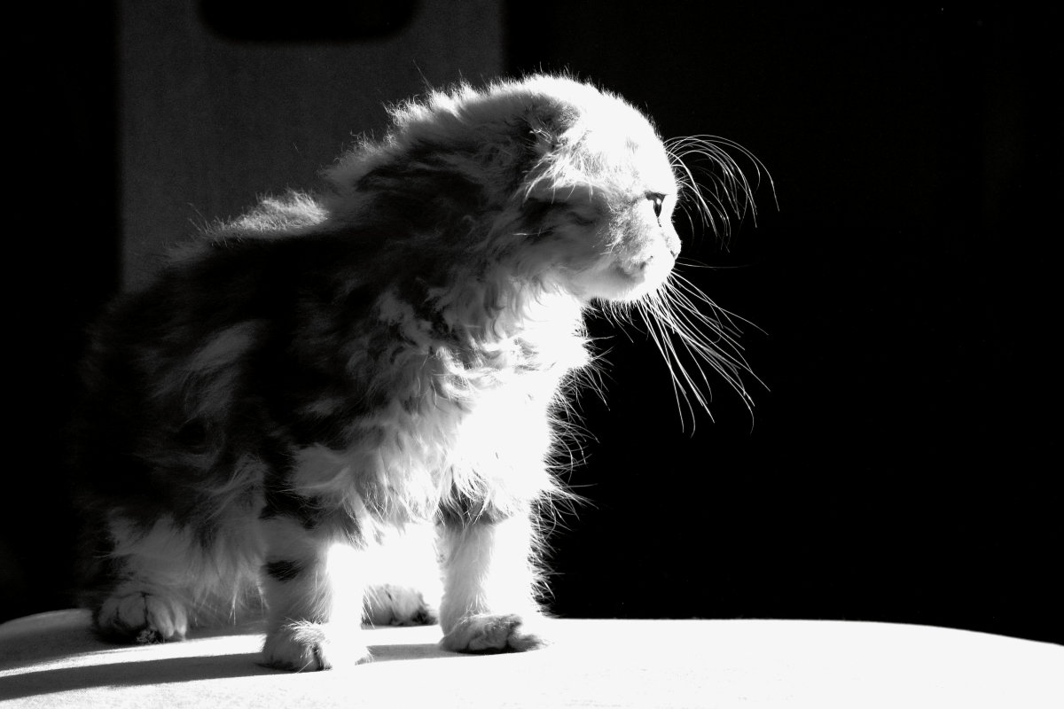 Хочется больше света! - Laborant Григоров