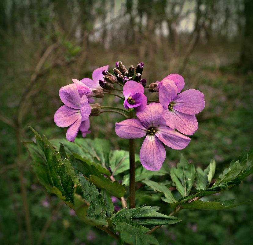 Лесной цветочек - Клара