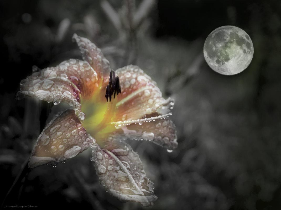Душа Луны - Екатерина Рябинина