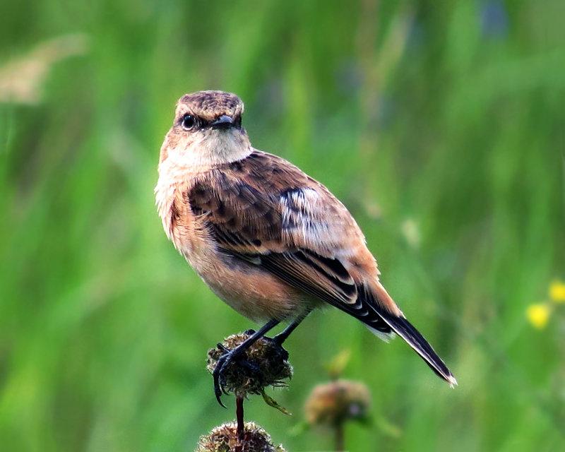 Птичка на лугу - Екатерина Торганская