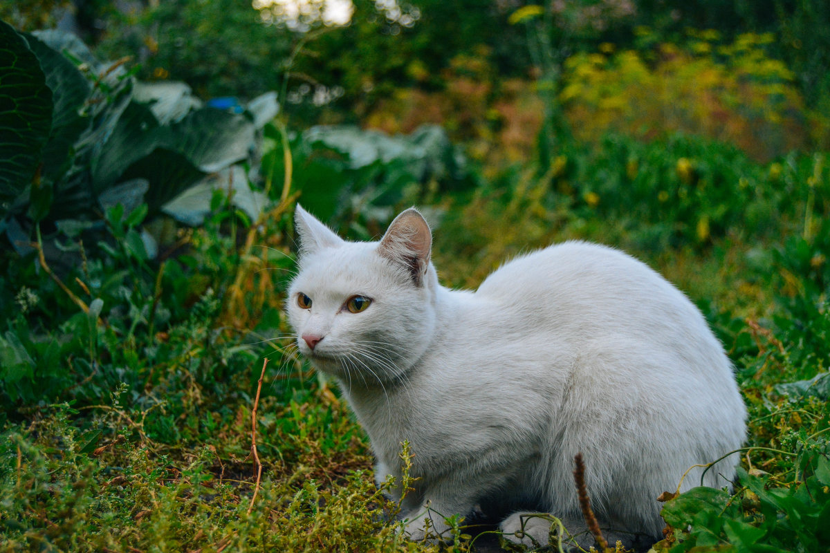 мудрый старый кот - Света Кондрашова