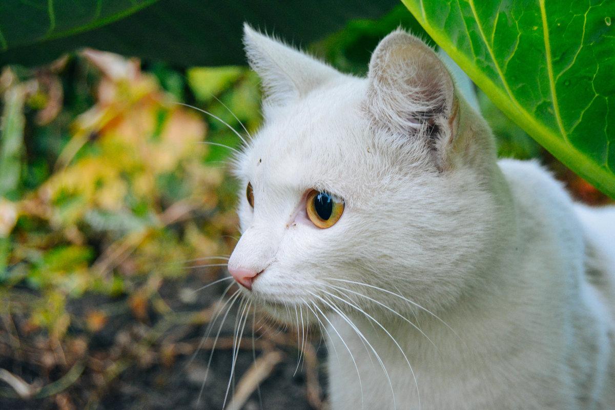 Котик - Света Кондрашова