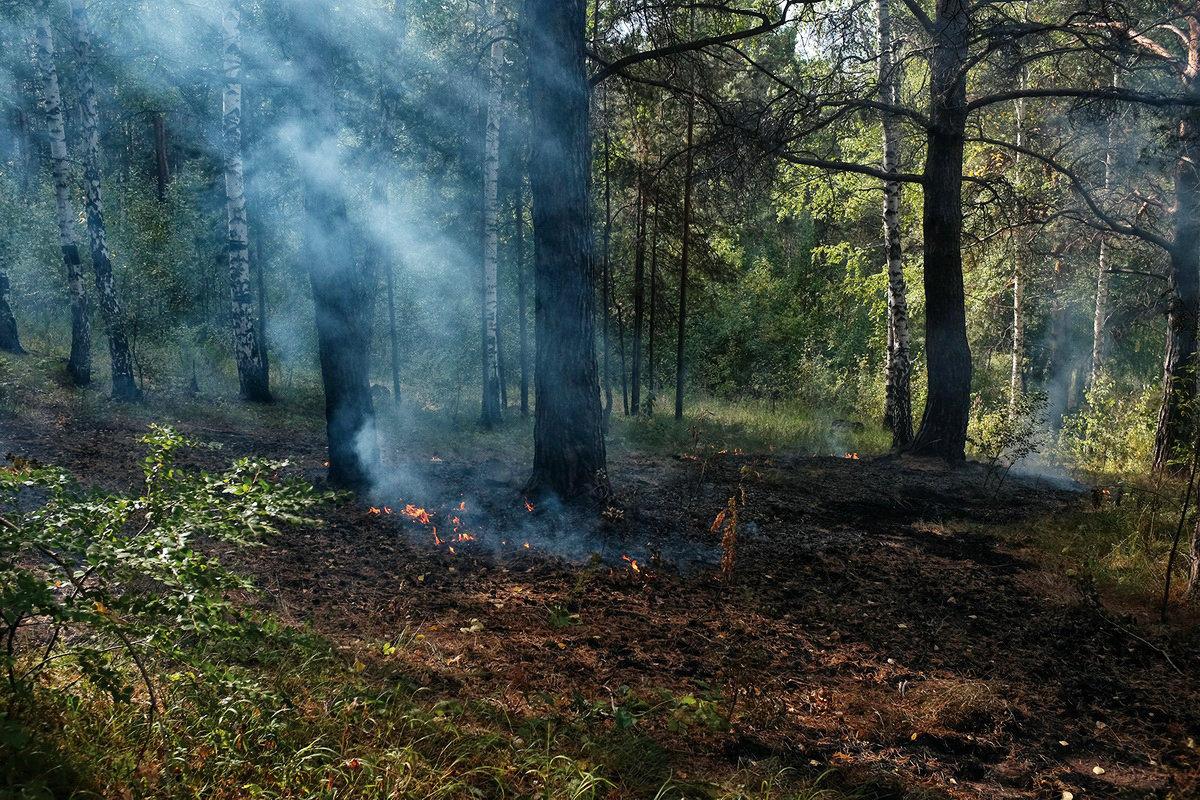 Возгорание в лесу. - Валерий Молоток