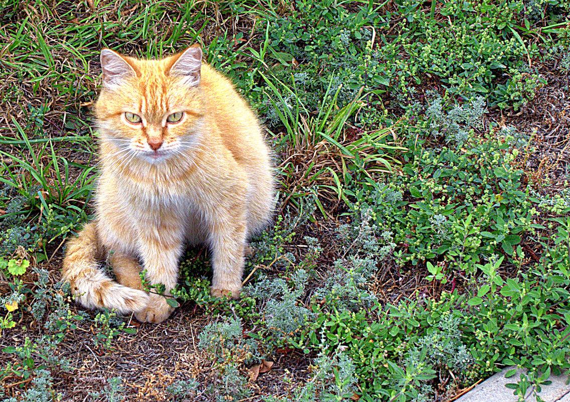 Осенний кот в зеленом интерьере... - Александр Облещенко