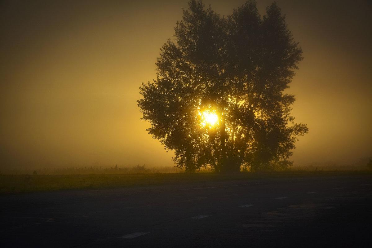 Утренний свет. - юрий Амосов