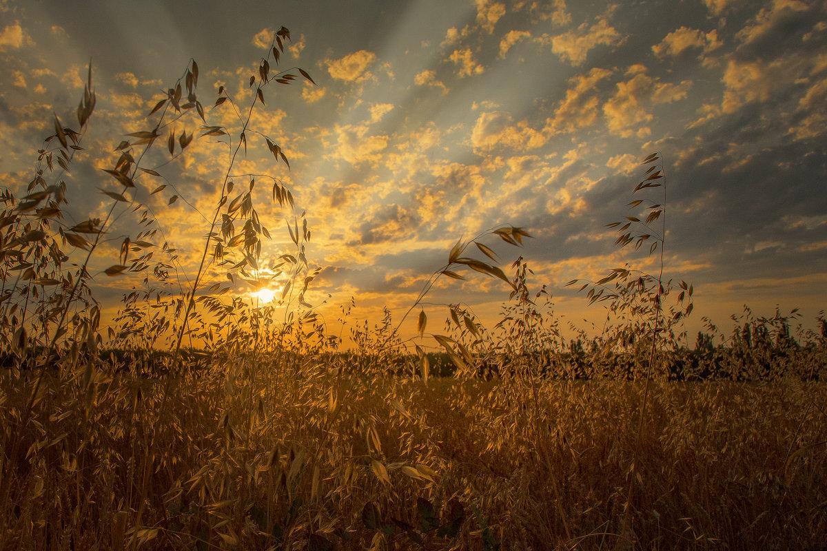 Вечер в золото одел и поля и небеса! - Александр Сыроватка