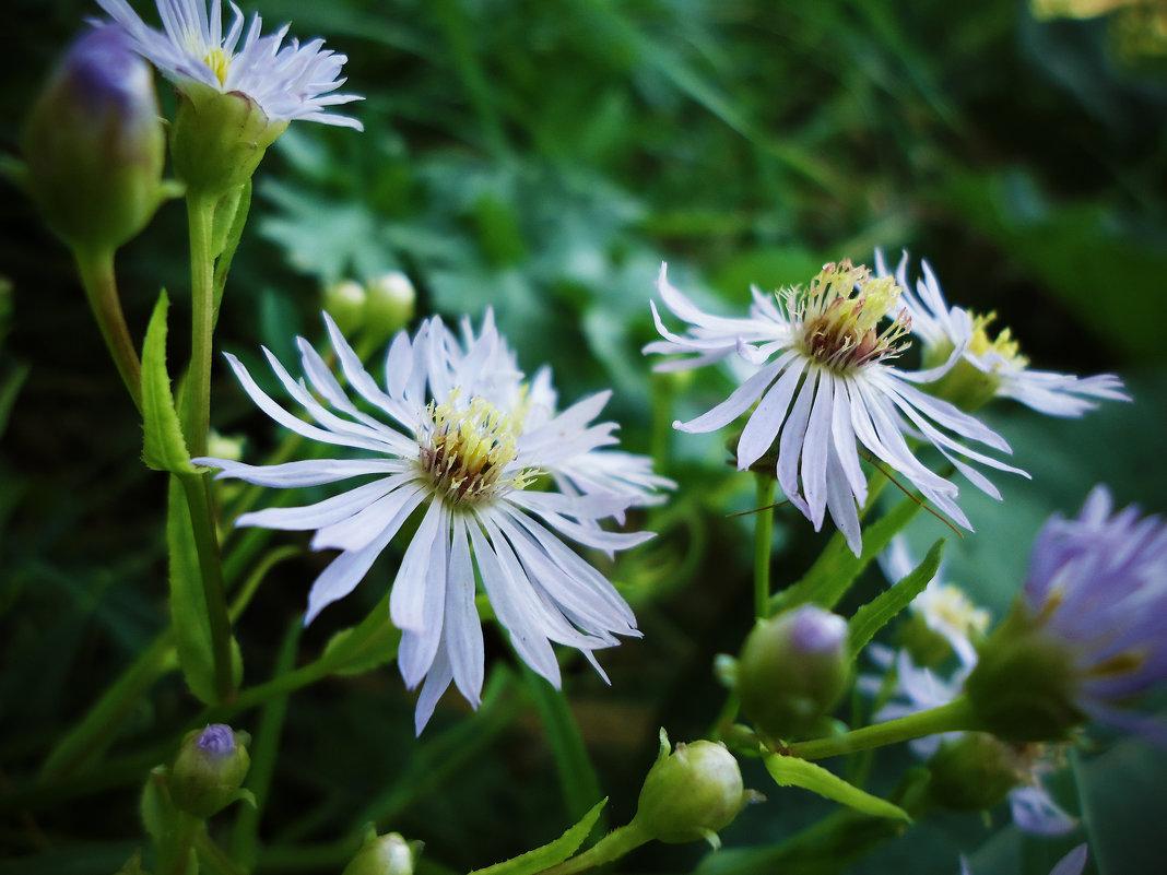 Мир маленьких цветов - Виктория Власова