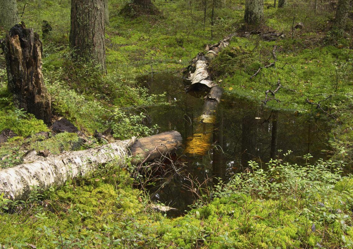 Сыро в лесу - Aнна Зарубина