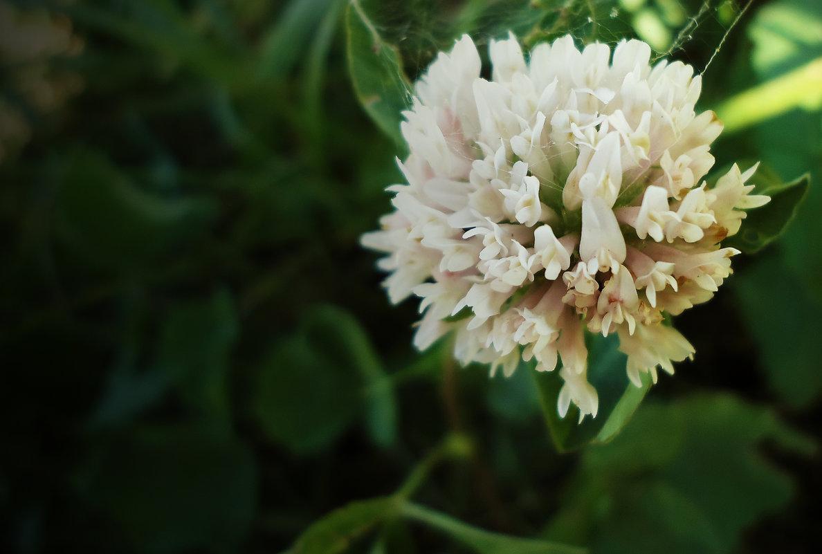 Просто цветок - Виктория Власова