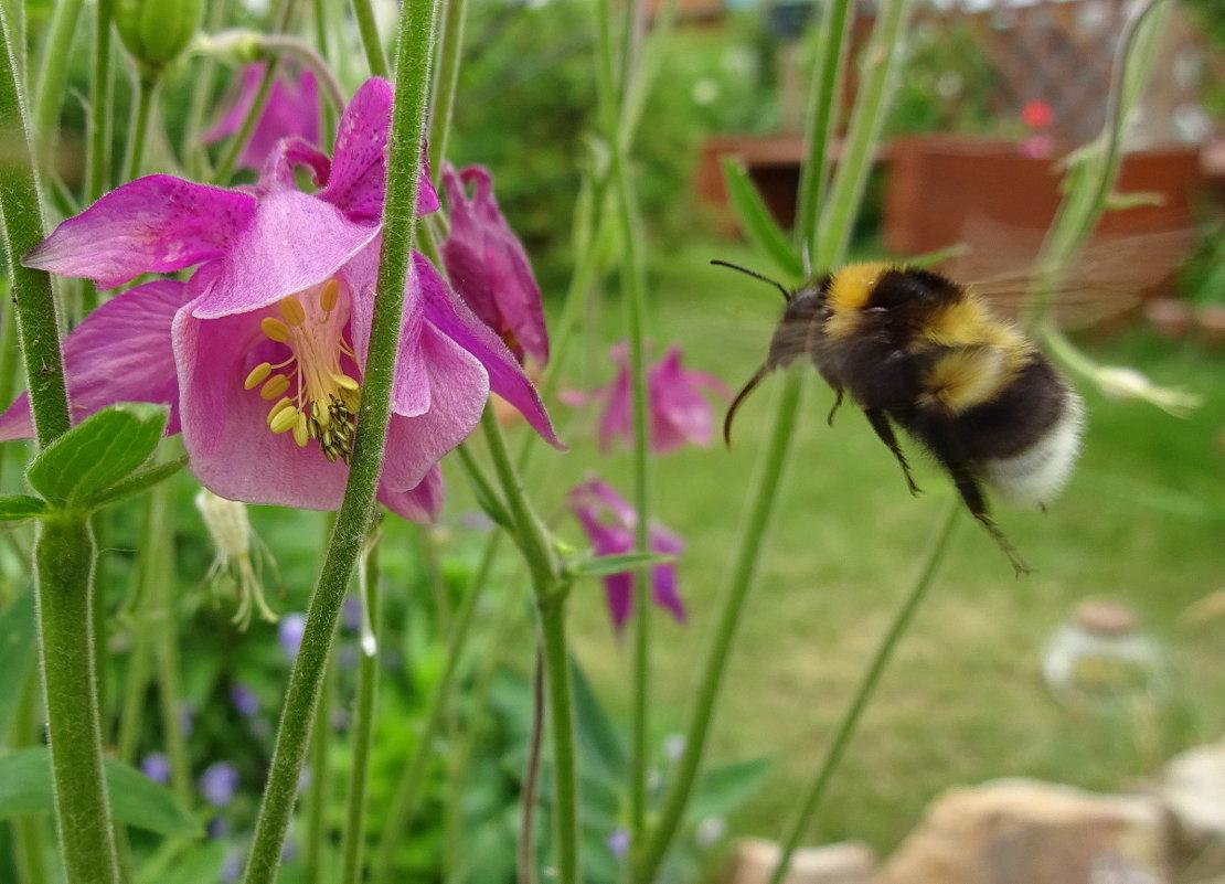 Он с цветка к цветку летит так лениво и жужжит –бархатист, крылат, пузат и костюмчик полосат… - Елена Ярова