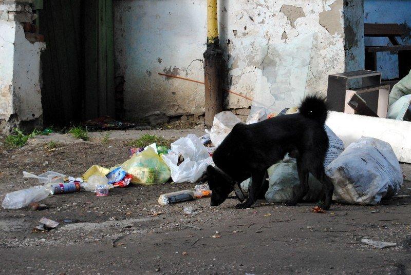 Кто подкармливает собак - Андрей Фетисов