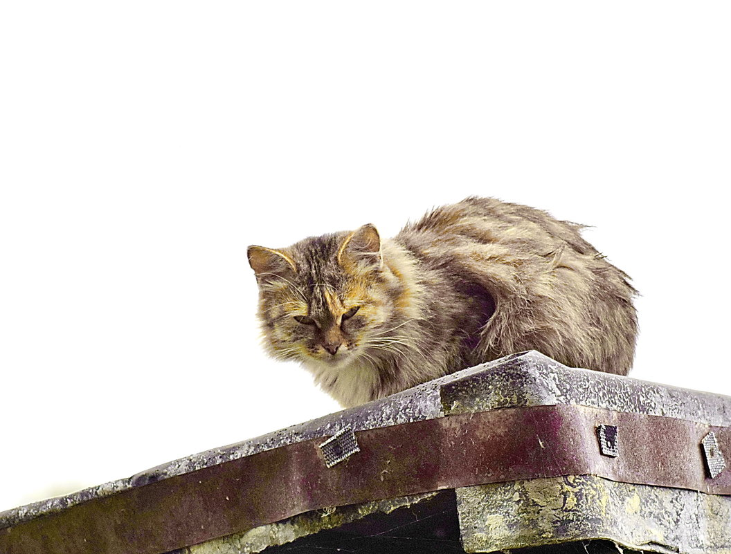 Тише,мыши! Кот на  крыше! - A. SMIRNOV