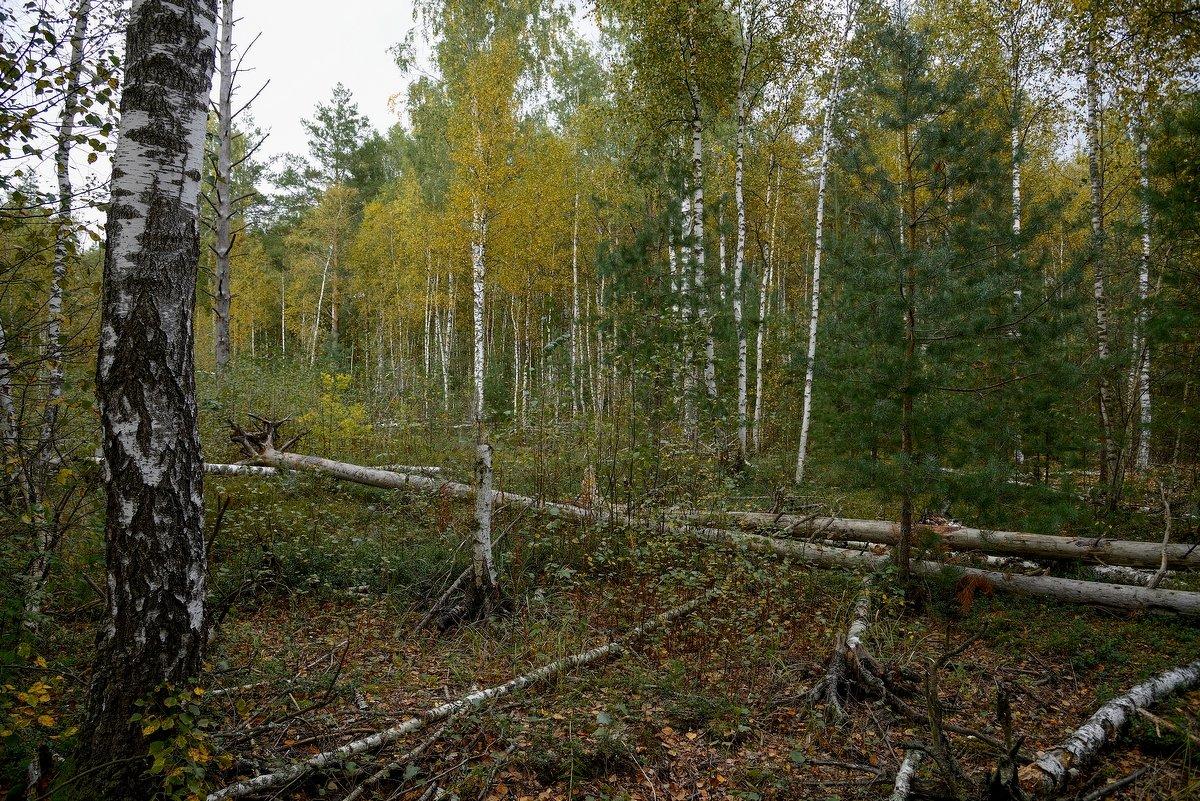 Осенний лес. - Юрий Бичеров