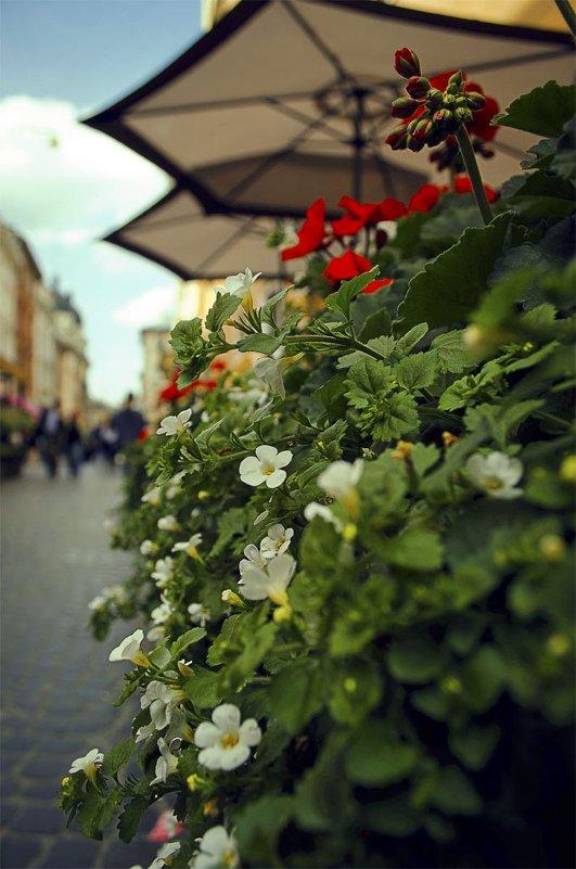 Городские цветы. - Елена Данько