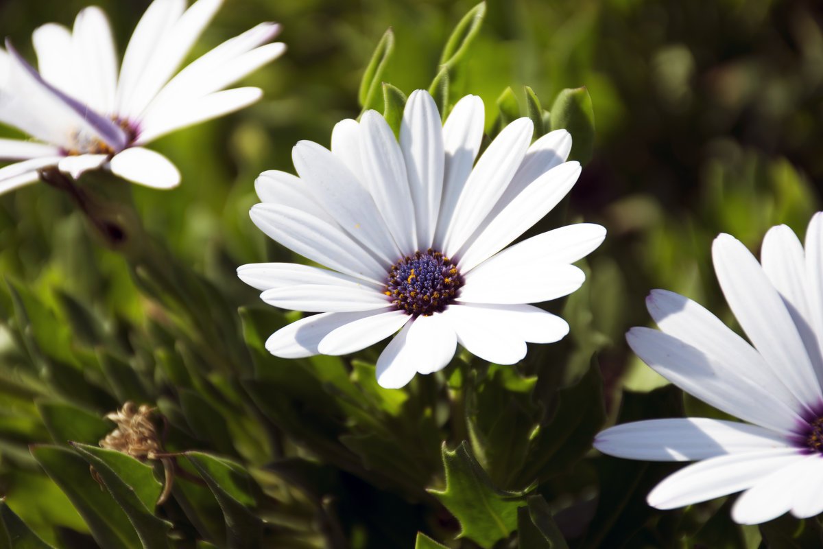 Осенние цветы 1 - Gudret Aghayev